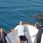 Гарантию на китов выдают Гавайи